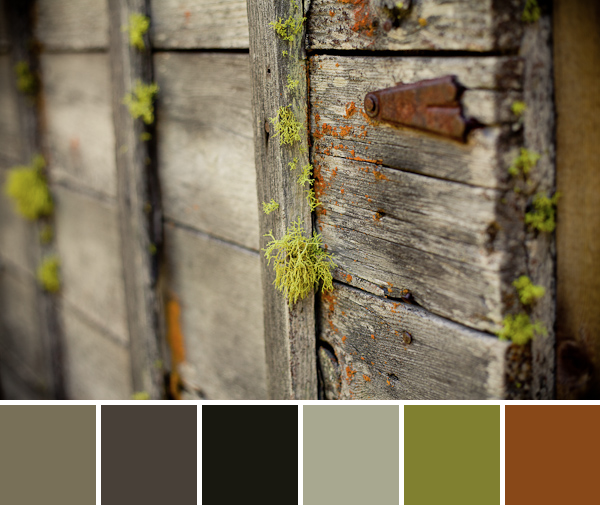 Color Palette Inspiration-palette (1)